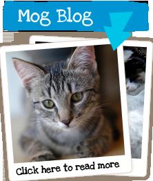 Mog Blog