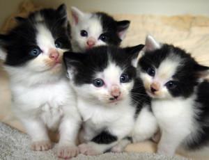 bw kitty group