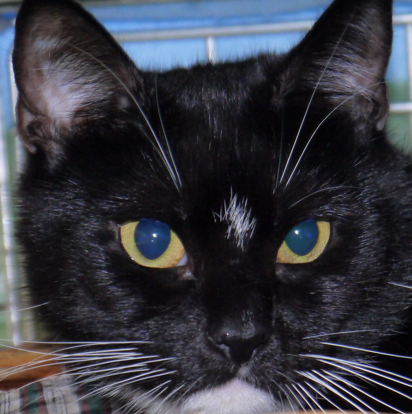 Lymington Cat Kitten Rescue
